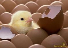 Google Image Result for http://www.hirevisiongroup.com/wp-content/uploads/2011/01/chick.jpg