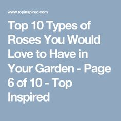 Top 10 Types of Roses You Would Love to Have in Your Garden - Page 6 of 10 - Top Inspired