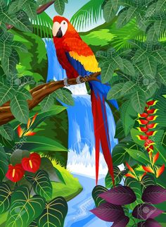 selva tropical illustrations - Google Search