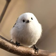 Codibugnolo Animals Beautiful, Cute Animals, Cute Birds, Cute Dogs, Nature Photography, Painting, Plumage, Frozen, Magic