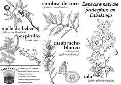 Árboles nativos de Cba