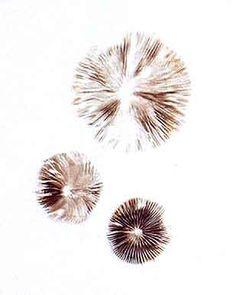 Mushroom Spores, Mushroom Art, T Art, Fungi, Print Tattoos, Geometry, Dandelion, Stuffed Mushrooms, Sketches