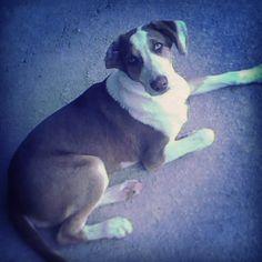 Deep silence talk through his #blueyes #dog