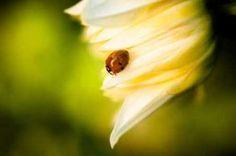 Cuadro ladybug II