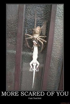 I'm not usually scared of a spider but seeing this thing would strike fear into my soul. OMG