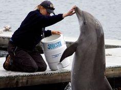 Navy dolphins make amazing torpedo find