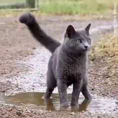 Who said cats don't like water ? I even love muddy water - Cats and Kitties - Katzen Cute Funny Animals, Cute Baby Animals, Cute Cats, Cute Animal Humor, Adorable Kittens, Pretty Cats, Wild Animals, Funny Dog Videos, Funny Dogs