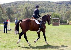 How to Warm Up at a Competition « HORSE NATION