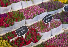 Tulips for sale in the Bloemenmarkt flower market, #Amsterdam, Netherlands