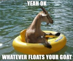 Whatever floats your goat.