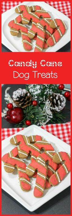 Looking for fun hypoallergenic dog treats? Check out this adorable candy cane holiday dog treats recipe! It's easy to make, and your pup will love it!