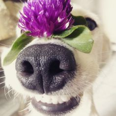 Conheça Euro, o cachorro sorridente da Tailândia