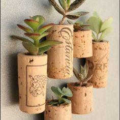 Tiny planters made from wine corks :)
