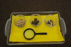 Seeds for children to explore with during our unit study on seeds. Found in the curriculum pages on JustMontessori.com.