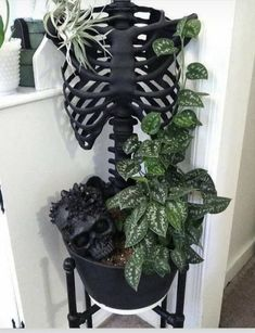 Goth Home Decor, Diy Home Decor, Halloween Diy, Halloween Decorations, Halloween Kitchen, Halloween Skeletons, Family Halloween, Halloween Halloween, Arrowhead Plant
