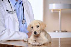 Small Animal Veterinarian - Animal Health Careers