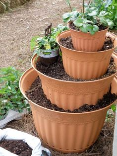 Create a tower by stacking pots filled with soil. Plant strawberry plants.