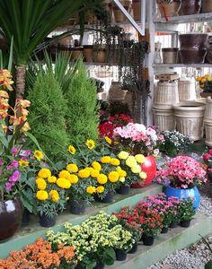 Aechmea fasciata , diferente e muito LINDA!!!   Flores e Mais Flores... de comuns até muito exóticas!  Lindas Bromélias...