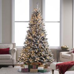 Flocked Blue Ridge Spruce Christmas Tree Trees Beautiful