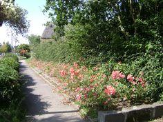 Le Faou in Brittany Brittany, Garden, Garten, Lawn And Garden, Gardens, Gardening, Outdoor, Bretagne, Yard