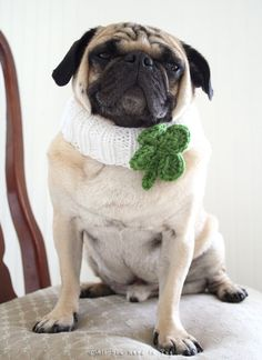 Lucky Clover Knit Dog Collar by AllYouNeedIsPugShop on Etsy, $13.00 #pug #pugs #dogs #pets