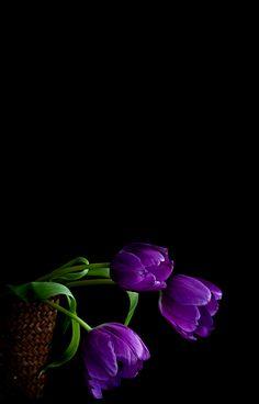 Lily Wallpaper, Purple Flowers Wallpaper, Blue Wallpaper Iphone, Cellphone Wallpaper, Black Wallpaper, Wallpaper Backgrounds, Exotic Flowers, Amazing Flowers, Yellow Flowers