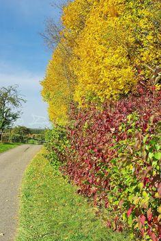 [Photography Tuesday] Autumn Breeze