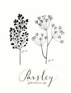 Parsley 8.5x11 -Culinary Art- Collection by evajuliet on Etsy https://www.etsy.com/uk/listing/46683340/parsley-85x11-culinary-art-collection