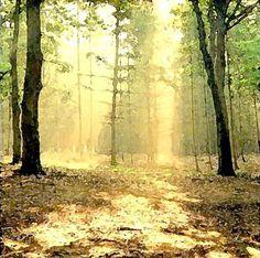 'Waldlichtung' von Dirk h. Wendt bei artflakes.com als Poster oder Kunstdruck $18.03