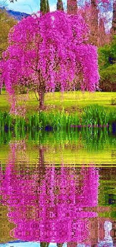Beautiful Gif, Beautiful Gardens, Beautiful Places, Fall Pictures, Pretty Pictures, Nature Images, Nature Pictures, Magical Tree, Colorful Trees