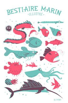 sea creatures illustration