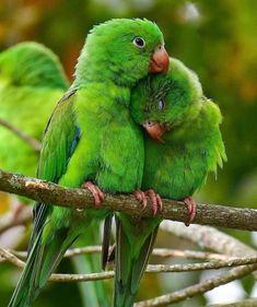 I Like Birds, Little Birds, Tropical Birds, Colorful Birds, Common Birds, Bird Quotes, Rare Birds, Wild Creatures, Bird Pictures