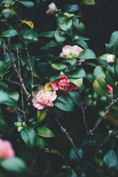 #Flower #Shrub #Image #Idea Unsplash, Photograph, Petal, Tree - Follow @extremegentleman for more pics like this!
