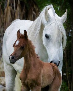 Mother and foal ❤❤❤