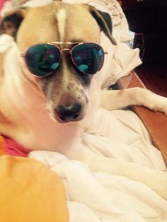 Duduma Premium Classic Sunglasses with Metal Frame Protection Funny Sunglasses, Cat Eye Sunglasses, Mirrored Aviator Sunglasses, Funny Images, Lens, Smoke, Amazon, Frame, Clothing