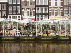 the flower market in Amsterdam