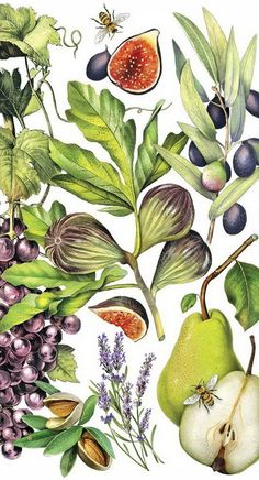 Botanical Drawings, Botanical Illustration, Botanical Prints, Illustration Art, Scientific Drawing, Art Courses, Fruit Art, Floral Watercolor, Lovers Art