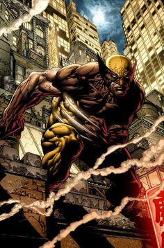 Wolverine by David Finch