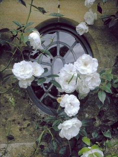 ❥ beautiful leaded glass window, stone and climbing roses