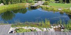 Natural pool - schwimmteich