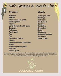 Safe Weeds & Grasses