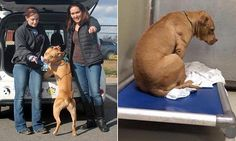 Every dog DOES have its day: Depressed rescue animal who just stared at the wall of his cell is transformed the moment he leaves | Daily Mail Online
