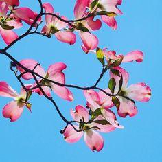 今日は五月晴れの良い天気 . . 連休楽しんでますか でも私はお仕事ですが . このpicは1ヶ月程前に撮ったもの . . #花 #flower #flowerstalking #awesome_florals #9vaga_flowersart9 #9vaga9 #symply_flowers #flower_members #ponyfony_flowers #fabulous_shots #favv_flowers #members_tpl #flower_special_member #pocket_pretty #lovly_flowergarden #ptk_flowers #detalhes_em_foco #kings_flora #flowersandmacro #bptalsmember #jR_lovegarden #quintaflower #loves_united_flowers #大阪 #心斎橋 #鍼灸 #美容鍼 #美容整体 #フットケア #メヌエット鍼灸整骨院 by menuett410