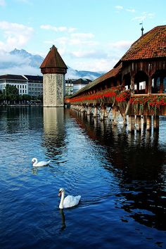 Luzerne, Switzerland. Another great city I got to visit. I walked across this bridge and came across a one footed pigeon we nicknamed Peg