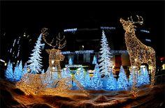 L' Albero di Natale: Luci d'Artista 2014 a Salerno