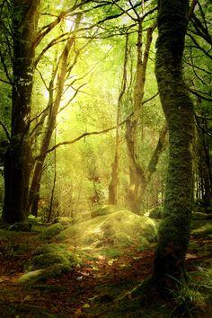 Wald, Lichtung, Herbst, Moos, Waldboden