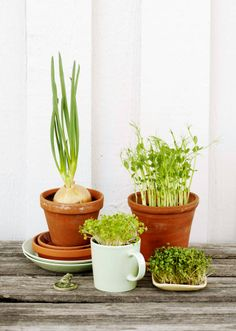 DIY grow your own sprouts Breakfast Snacks, Green Garden, Grow Your Own, Balcony Garden, Life Inspiration, Diy Flowers, Gardening Tips, Sprouts, Planting Flowers