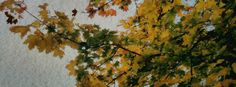 Stock images: Facebook cover photo (851px x 315px) - Trees - 1 November 2015