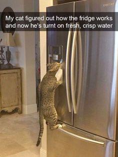 Cute Kittens Doing Funny Things Cute Cats Kawaii Funny Animal Jokes, Funny Cat Memes, Cute Funny Animals, Animal Memes, Cute Baby Animals, Funny Cute, Cute Cats, Cat Jokes, Cat Fun