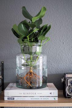 Water Plants, die pflegeleichte Zimmerpflanze. Alles über den neuen Trend, wie du eine Pflanze im Glas pflegst und wo du Water Plants online kaufen kannst! Pfelgeleichte Zimmerpflanzen | Pflanzen Deko | Pflanzen Wohnzimmer | Urban Jungle Blogger | String Regal | paulsvera